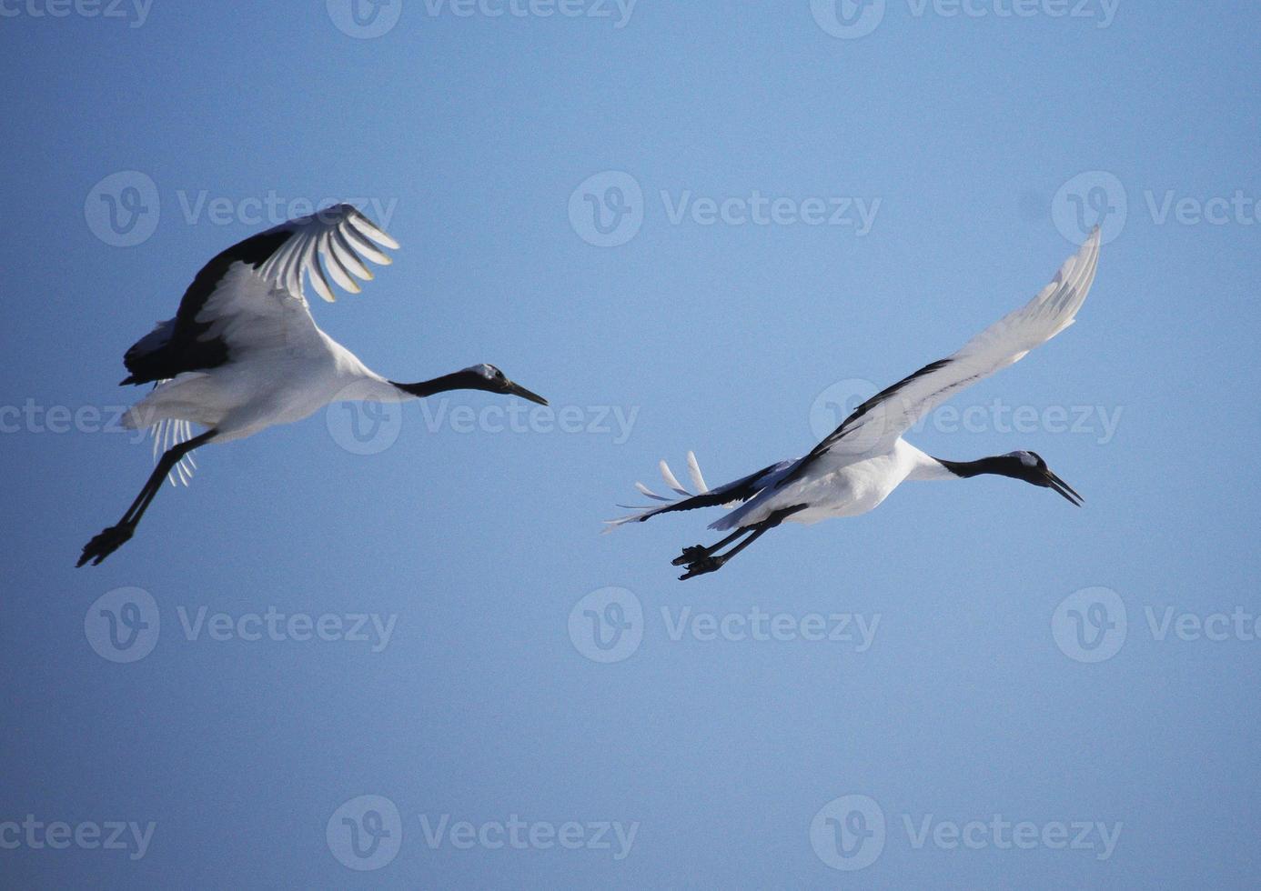 tanze den blauen Himmel foto