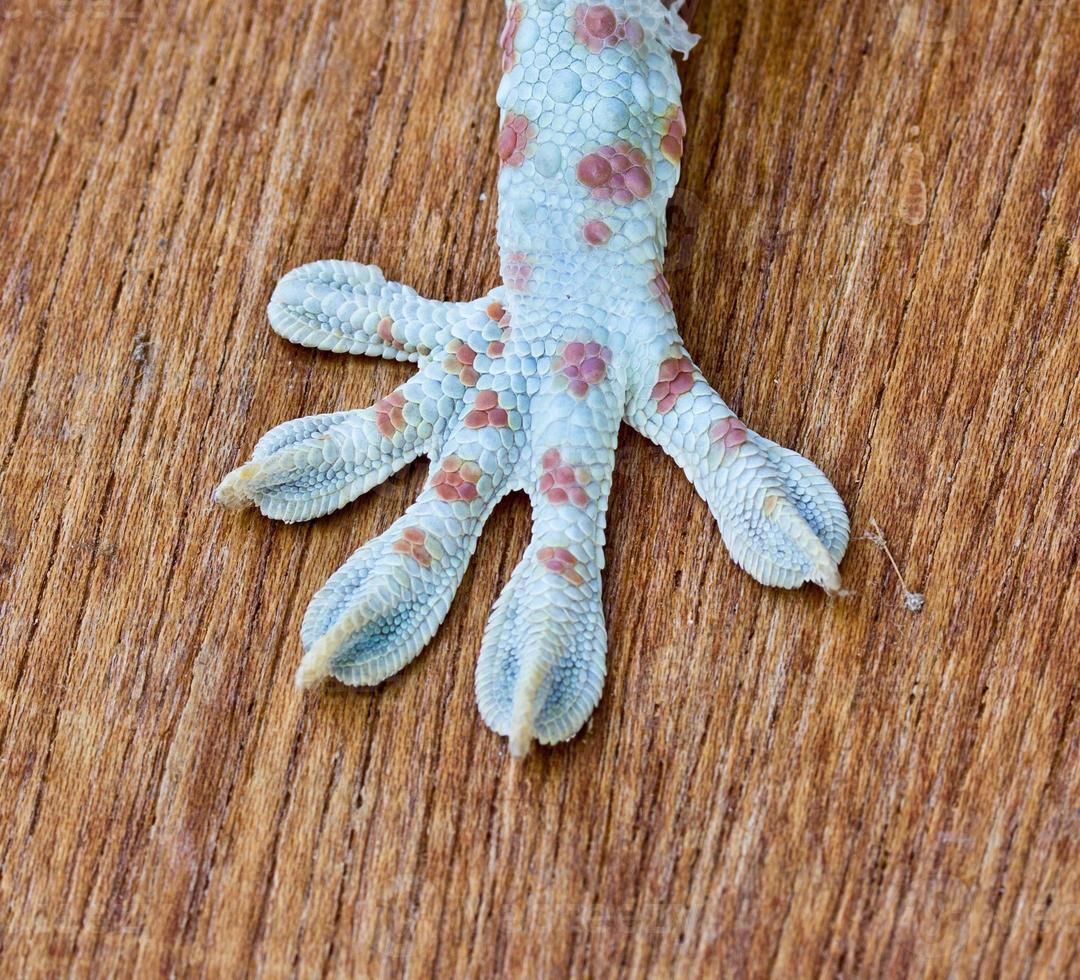 Makro von Fuß und Schwanz eines Geckos foto
