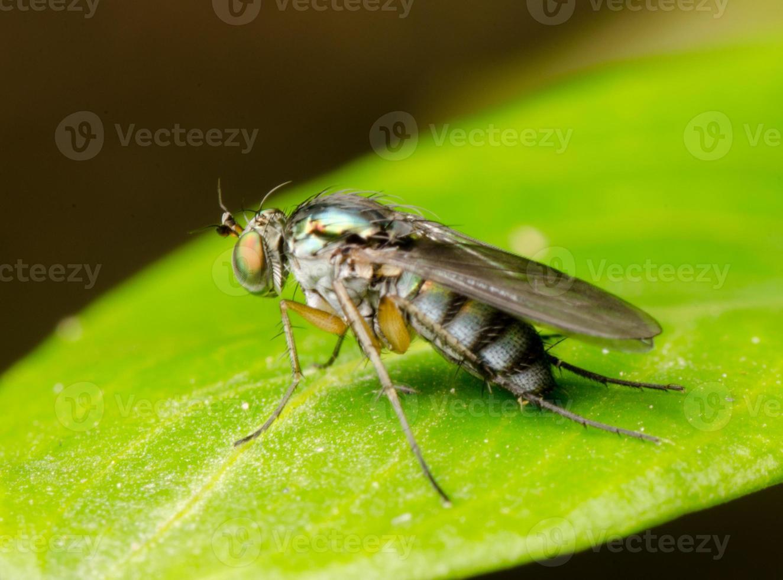 Insektenfliegenmakro foto