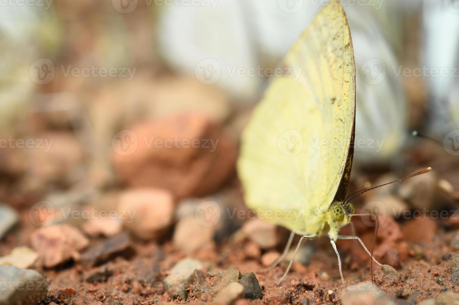 Schmetterling auf dem Boden foto