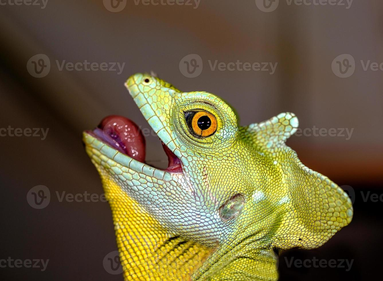 Kopfchamäleon selektiver Fokus auf das Auge foto