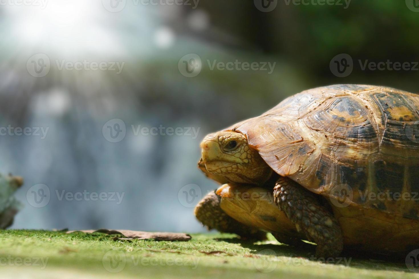 wilde Schildkröten in kleinen Wasserfall foto