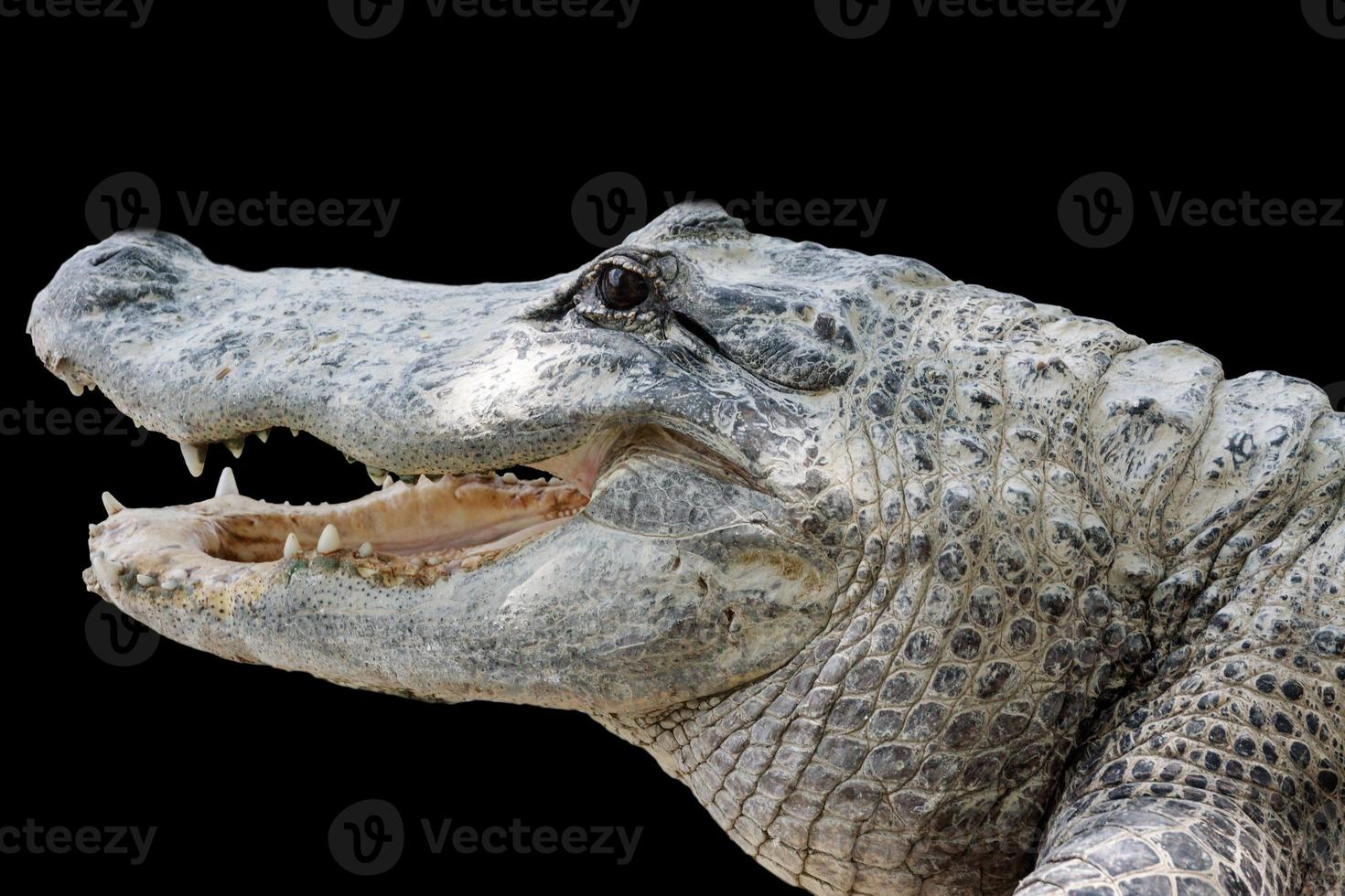 Krokodil mit scharfen Zähnen foto