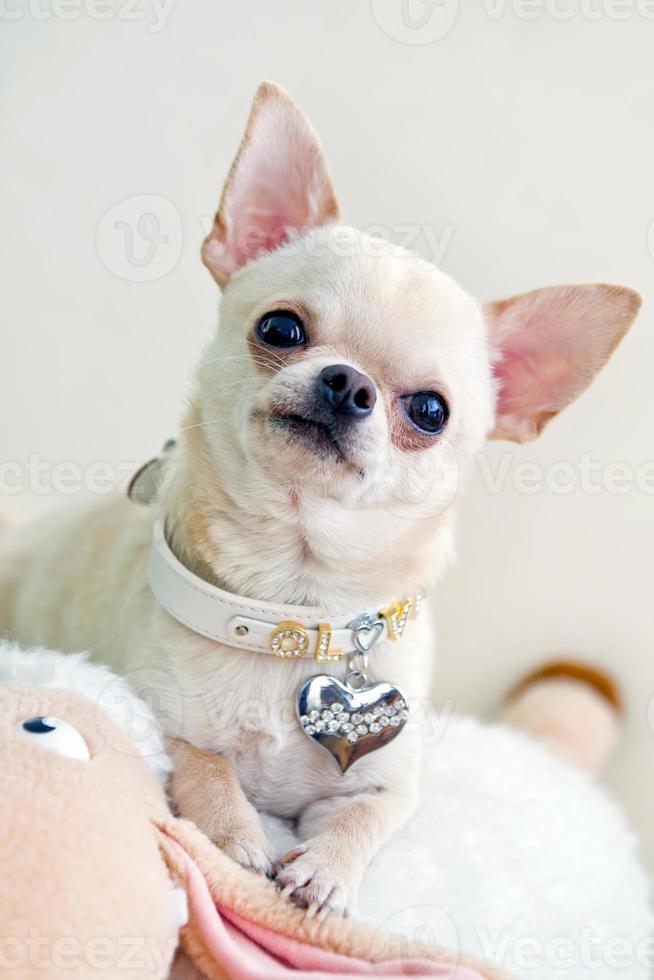 neugieriger Hund foto