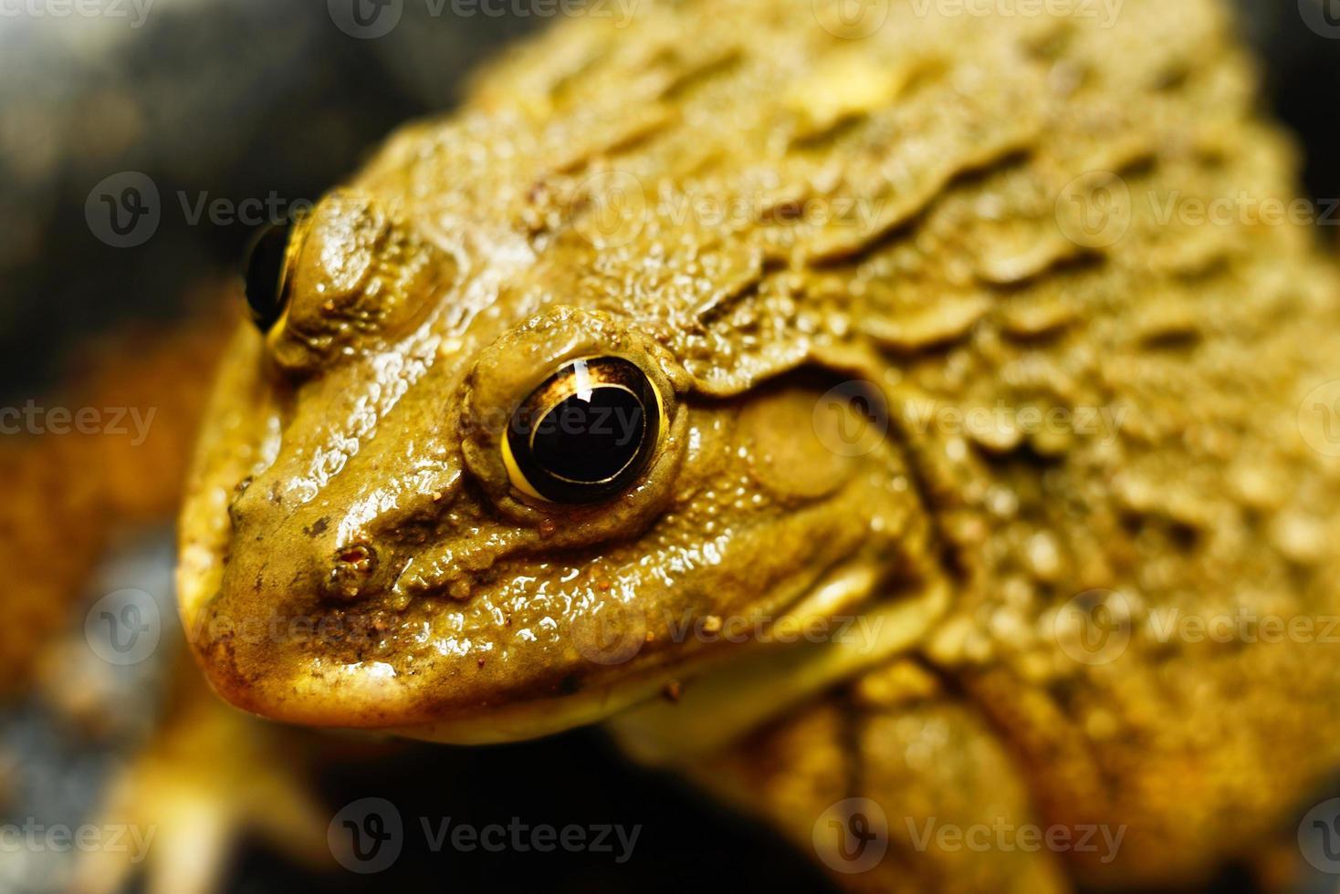 Frosch im Wasser foto