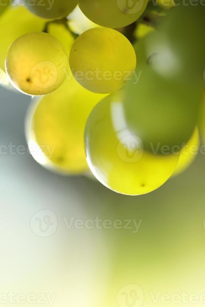 grüne Trauben foto