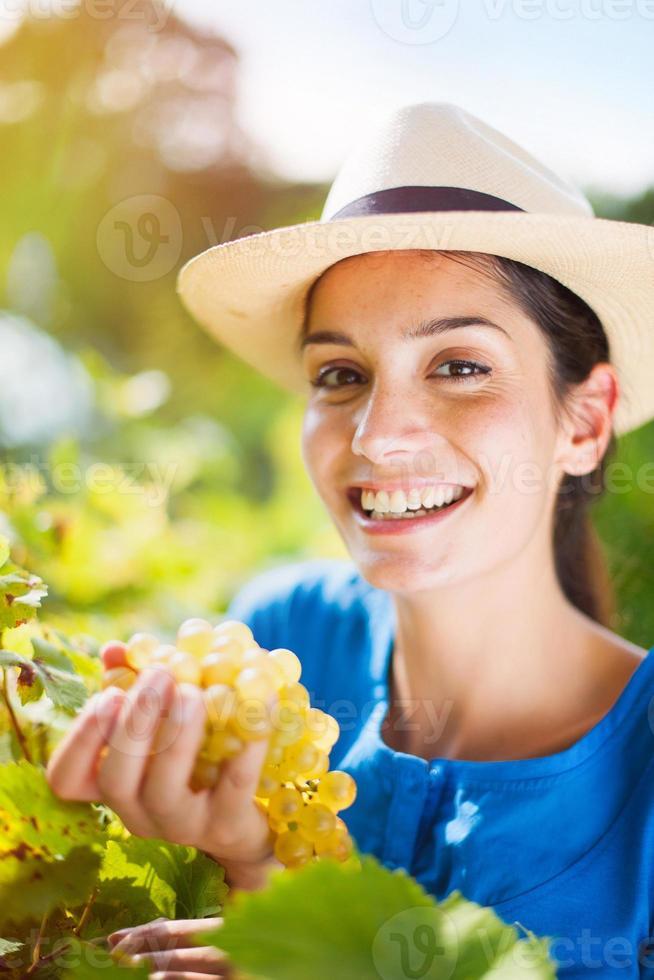 fröhliche junge Frau, die die Trauben in den Weinbergen erntet foto