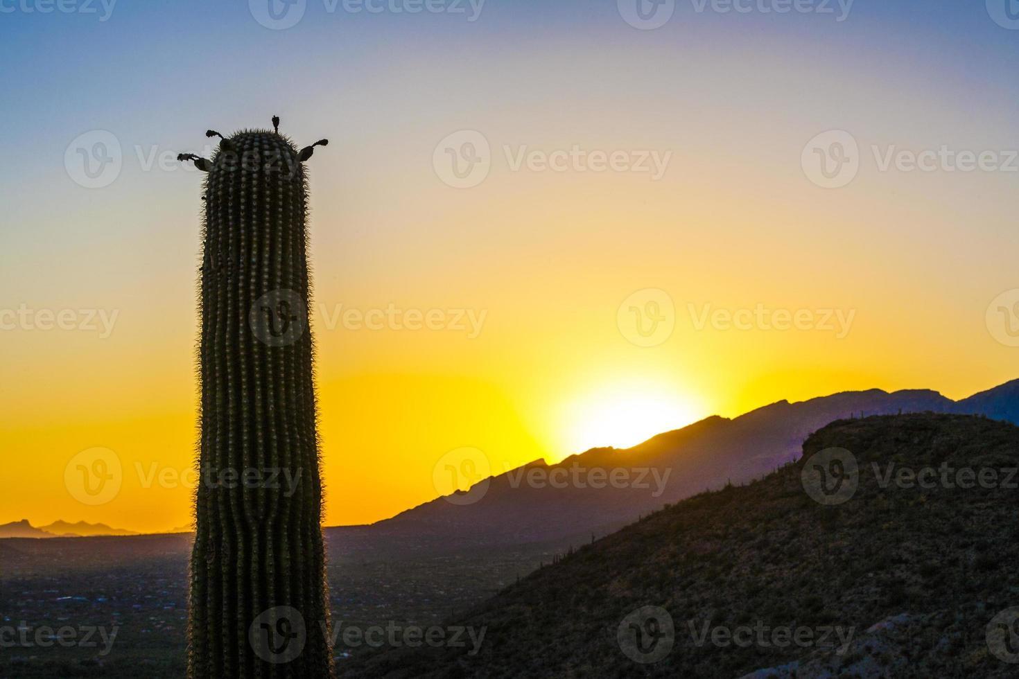 Sonnenuntergang mit schönen grünen Kakteen in der Landschaft foto