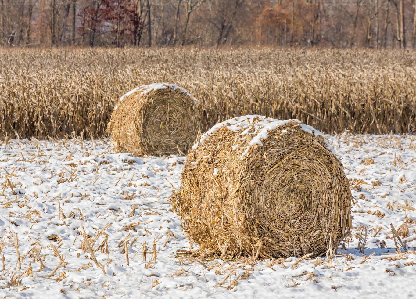 schneebedeckte Maisstängelballen foto