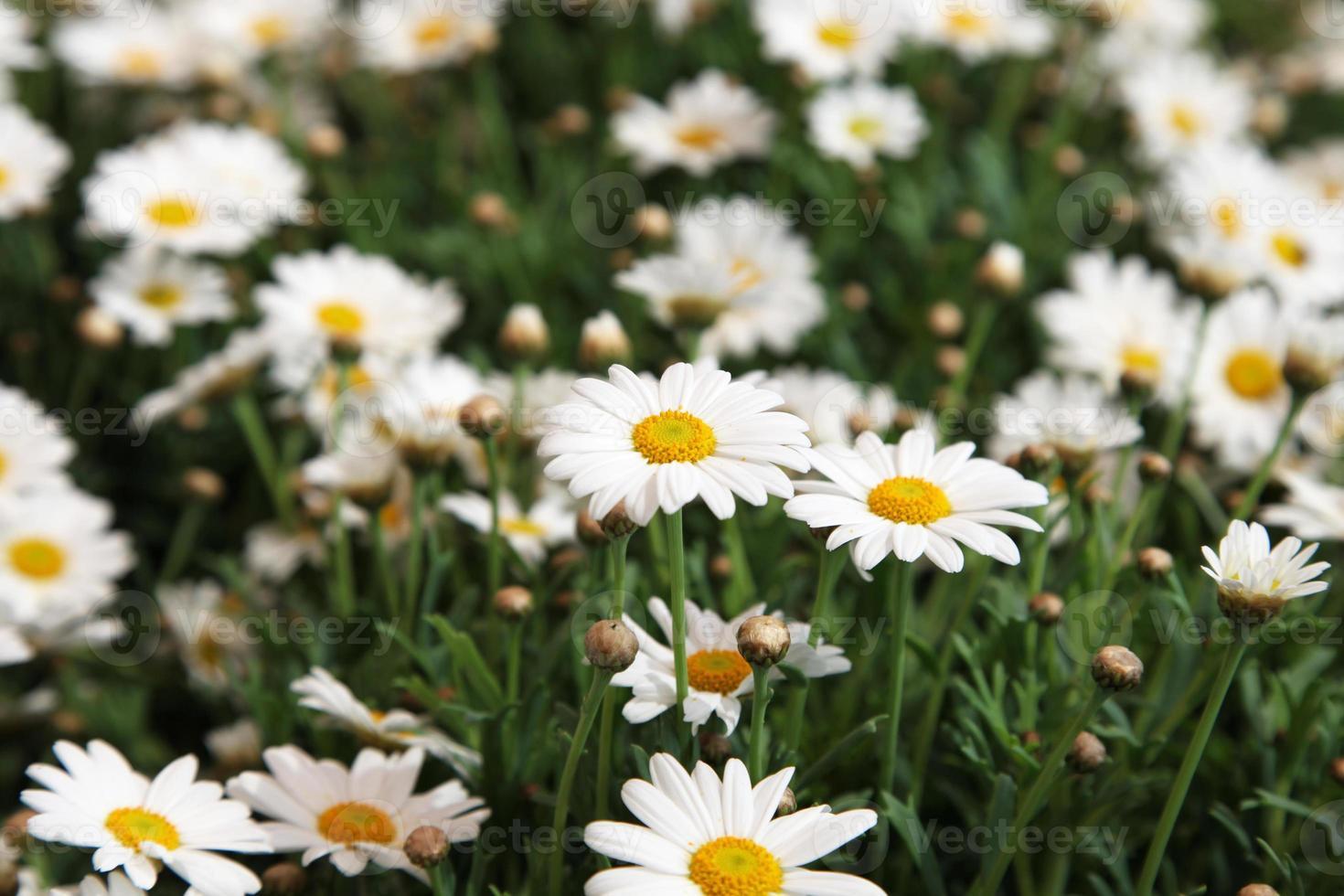Frühlingswiese foto