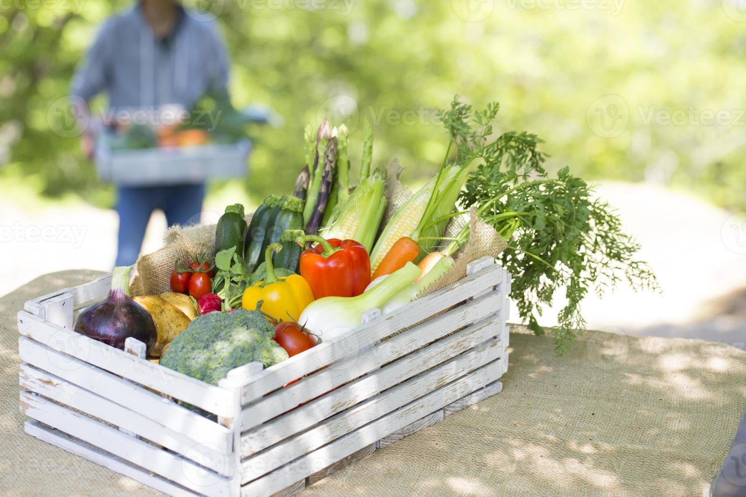 Ernte von Gemüse foto