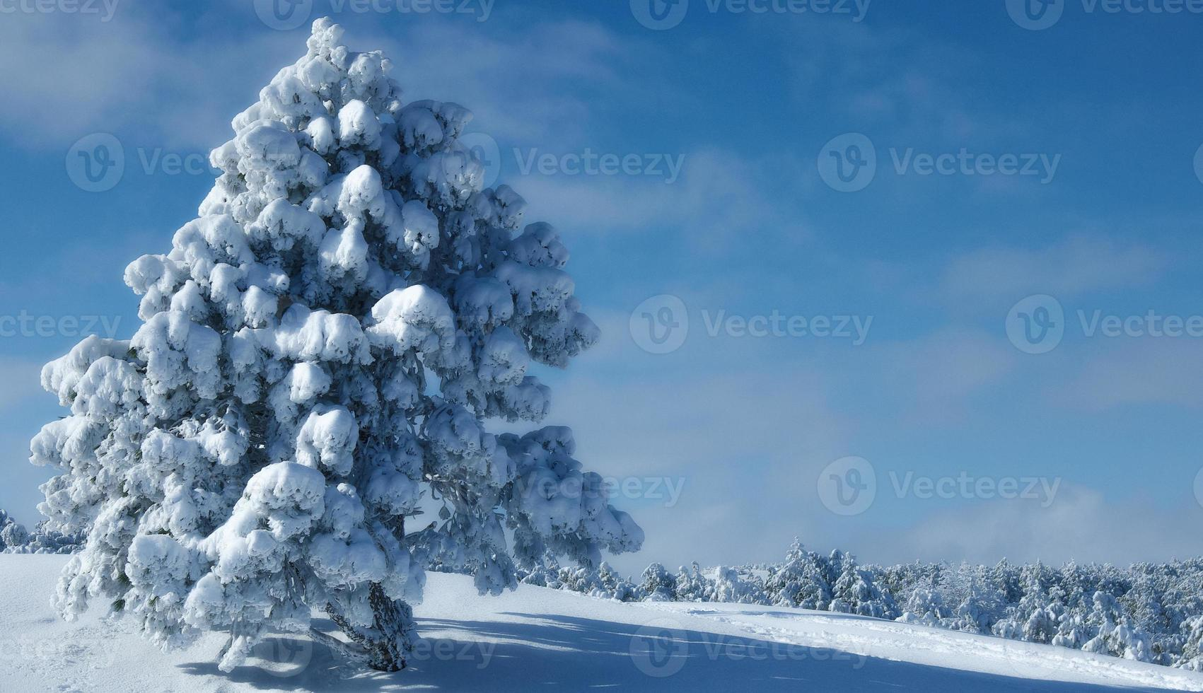Winterbaum foto