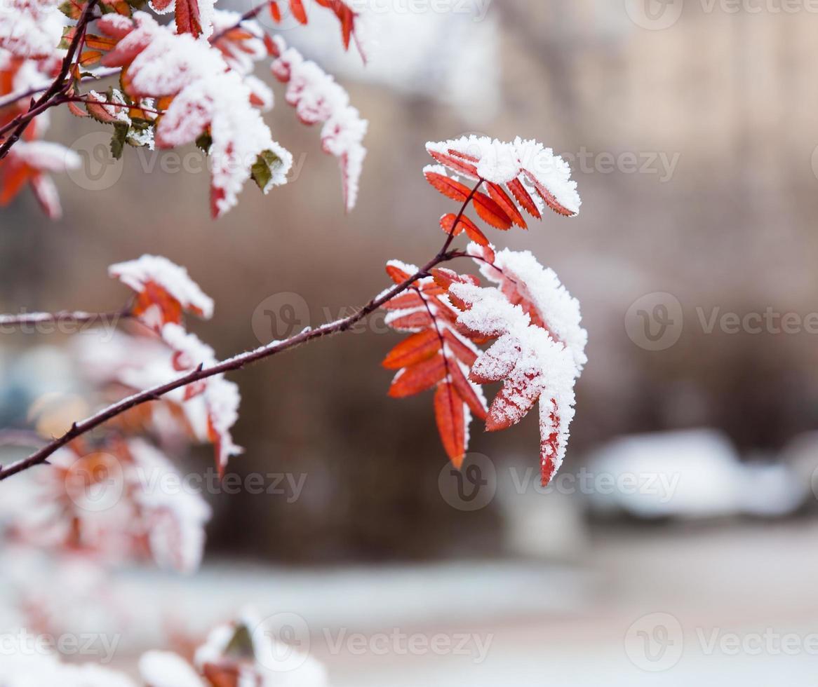 Winterbusch foto