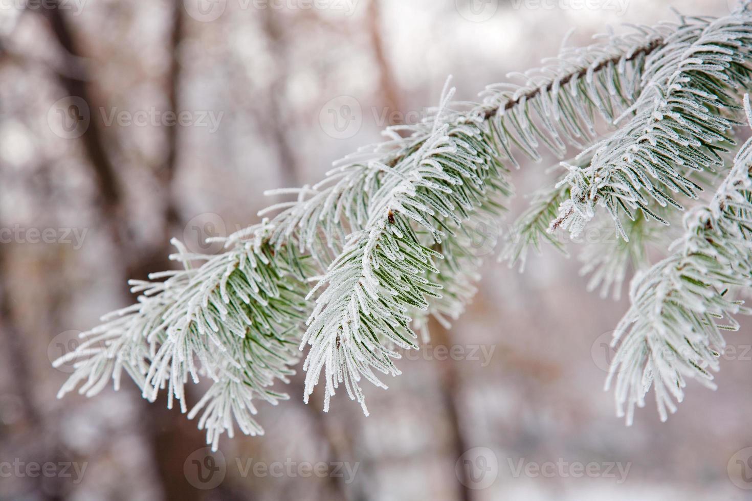 Winterstimmung foto
