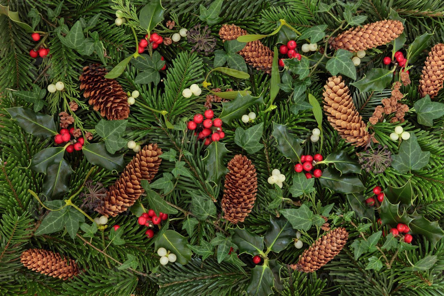Winterflora und -fauna foto