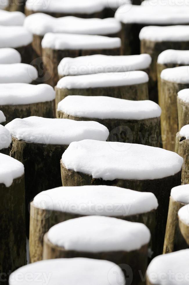 Winterbaumstümpfe foto