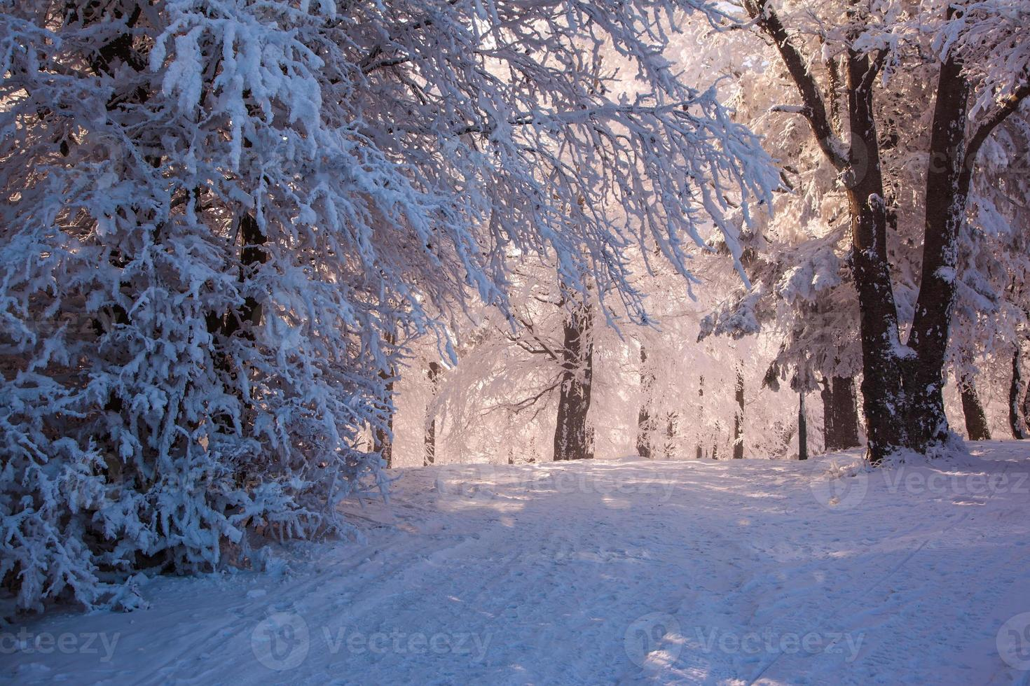 perfekter Winterweihnachtsmorgen foto