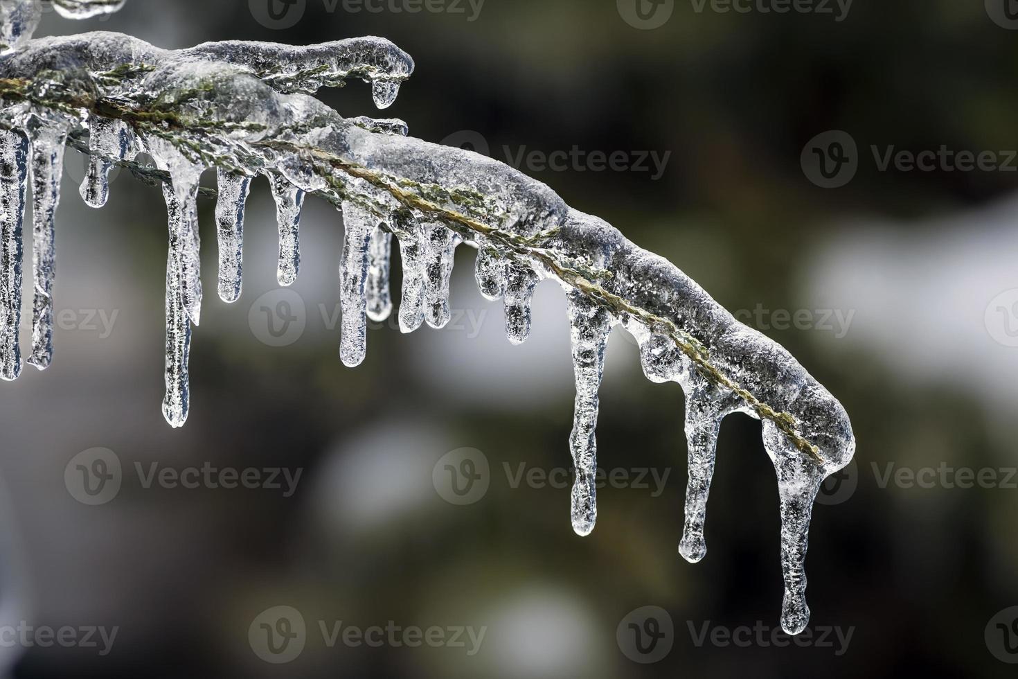 Eiszapfen am Winterzweig foto