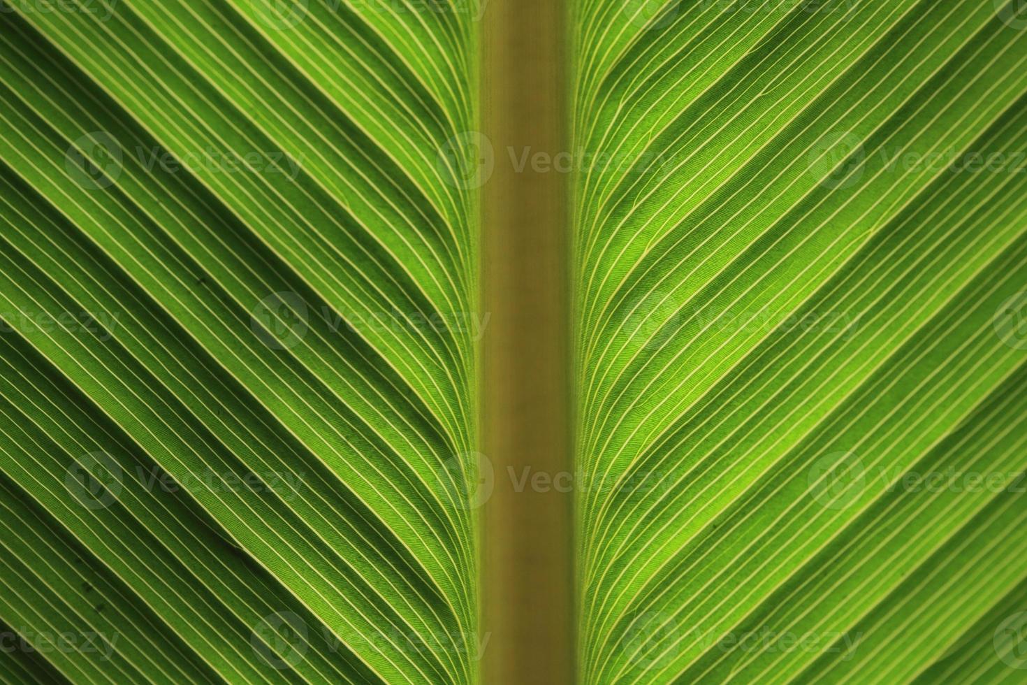 grünes Bananenblatt foto