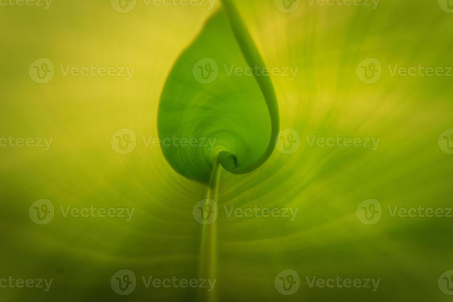 Textur des Bananenblattes foto