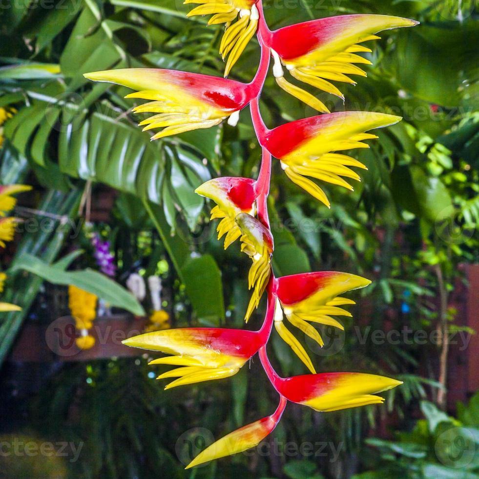 Blüte eines Bananenbaums in einem botanischen Garten foto