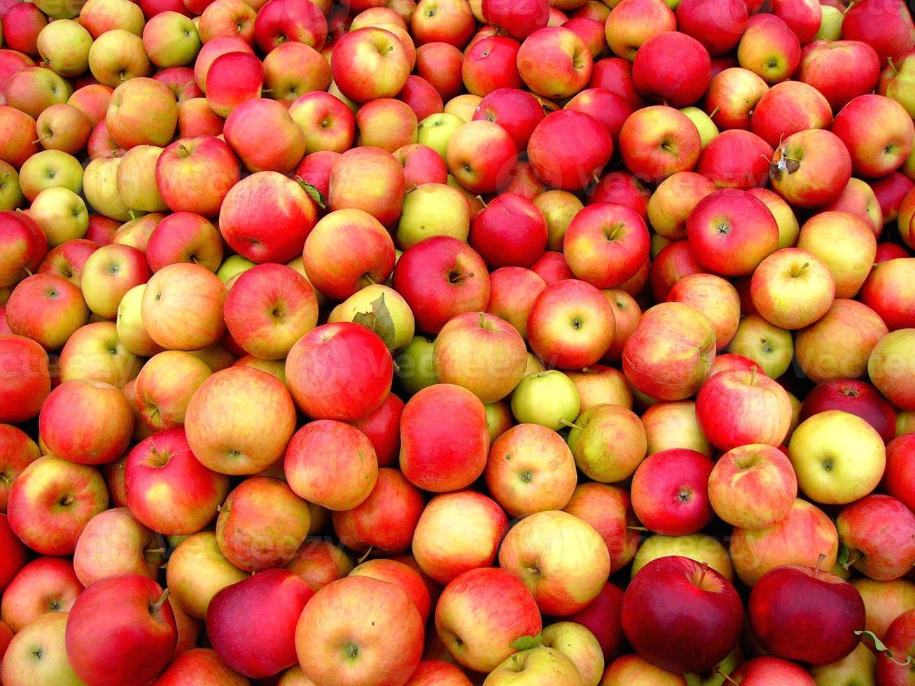 rote Äpfel! foto