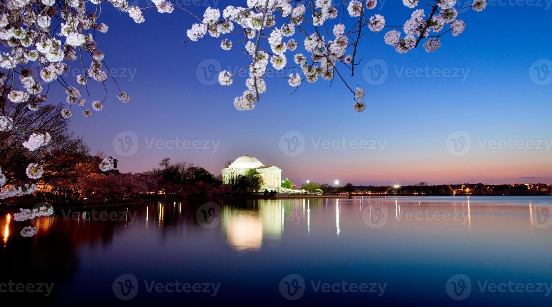 Kirschblüten in Washington DC foto