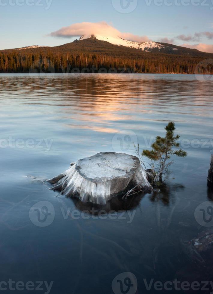 teilweise untergetauchter Baumstumpf Seeufer großer See mt Washington Oregon foto