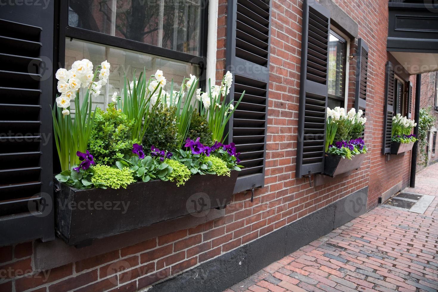 städtische Fensterbox foto