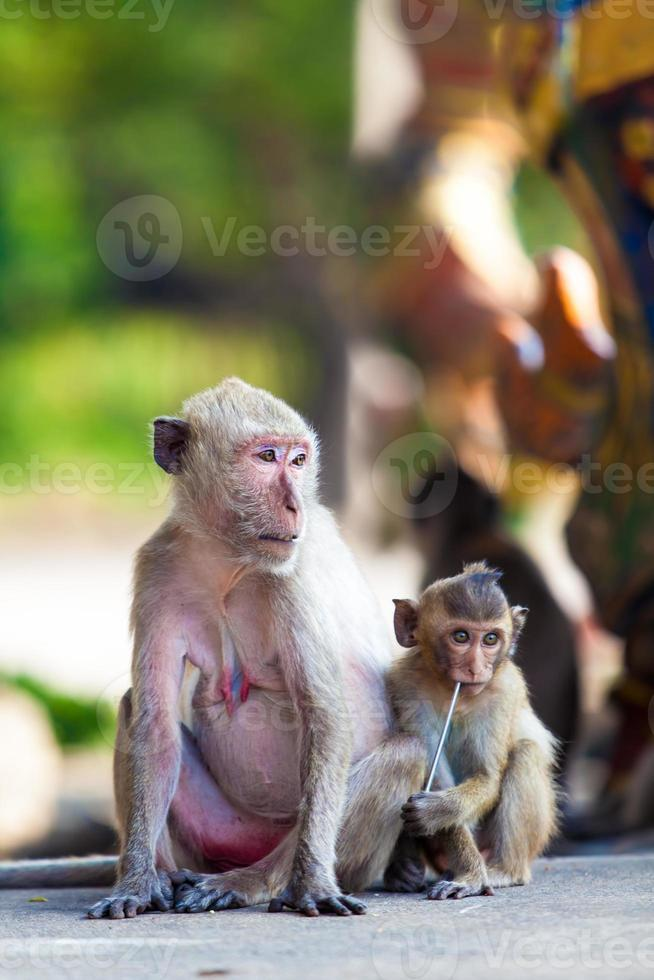 Affenfamilie foto