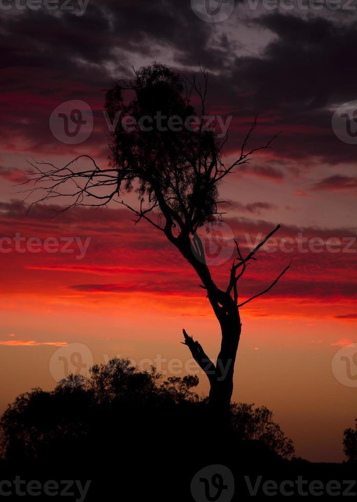 Sonnenuntergang über Busch foto