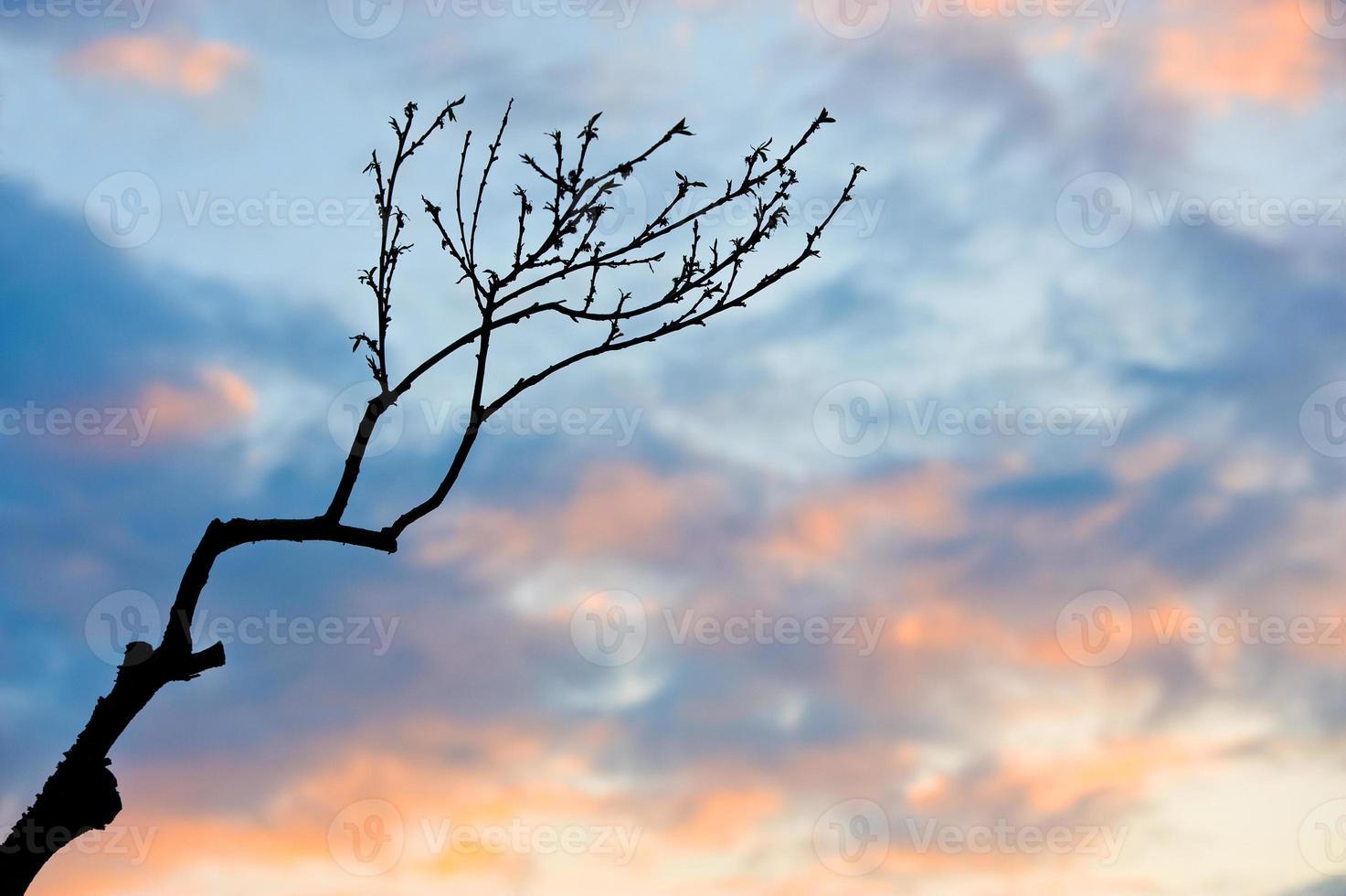 Zweig im Sonnenuntergang foto