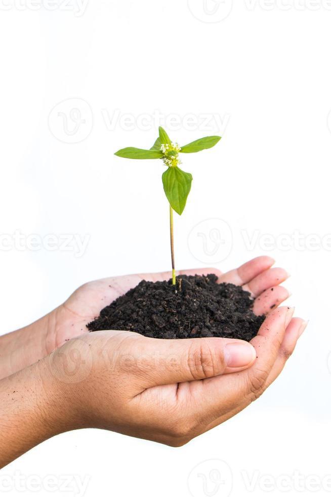 weibliche Hände, die eine Pflanze halten foto