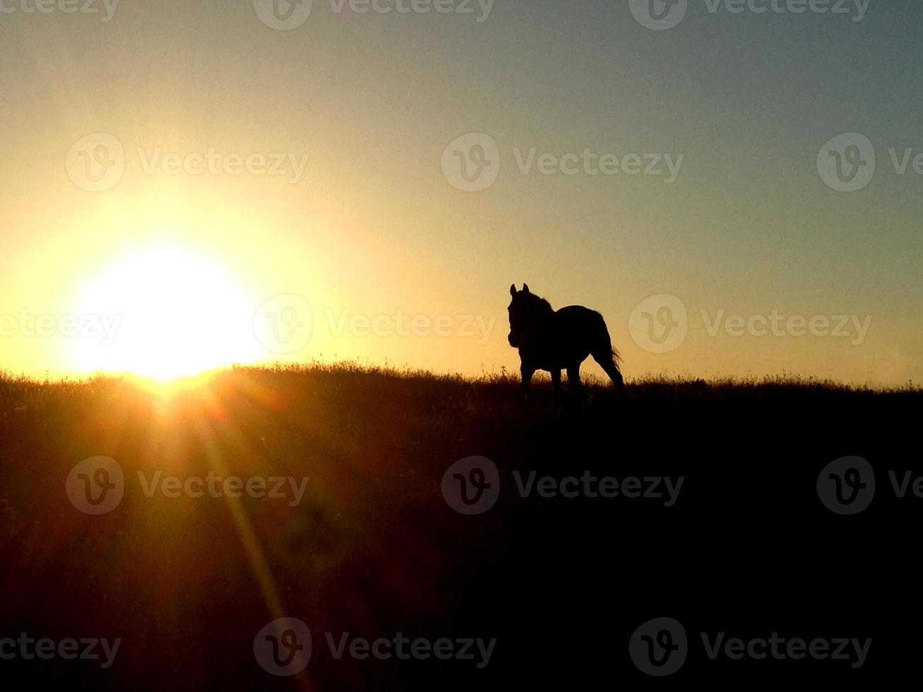 Pferd und Sonnenuntergang foto