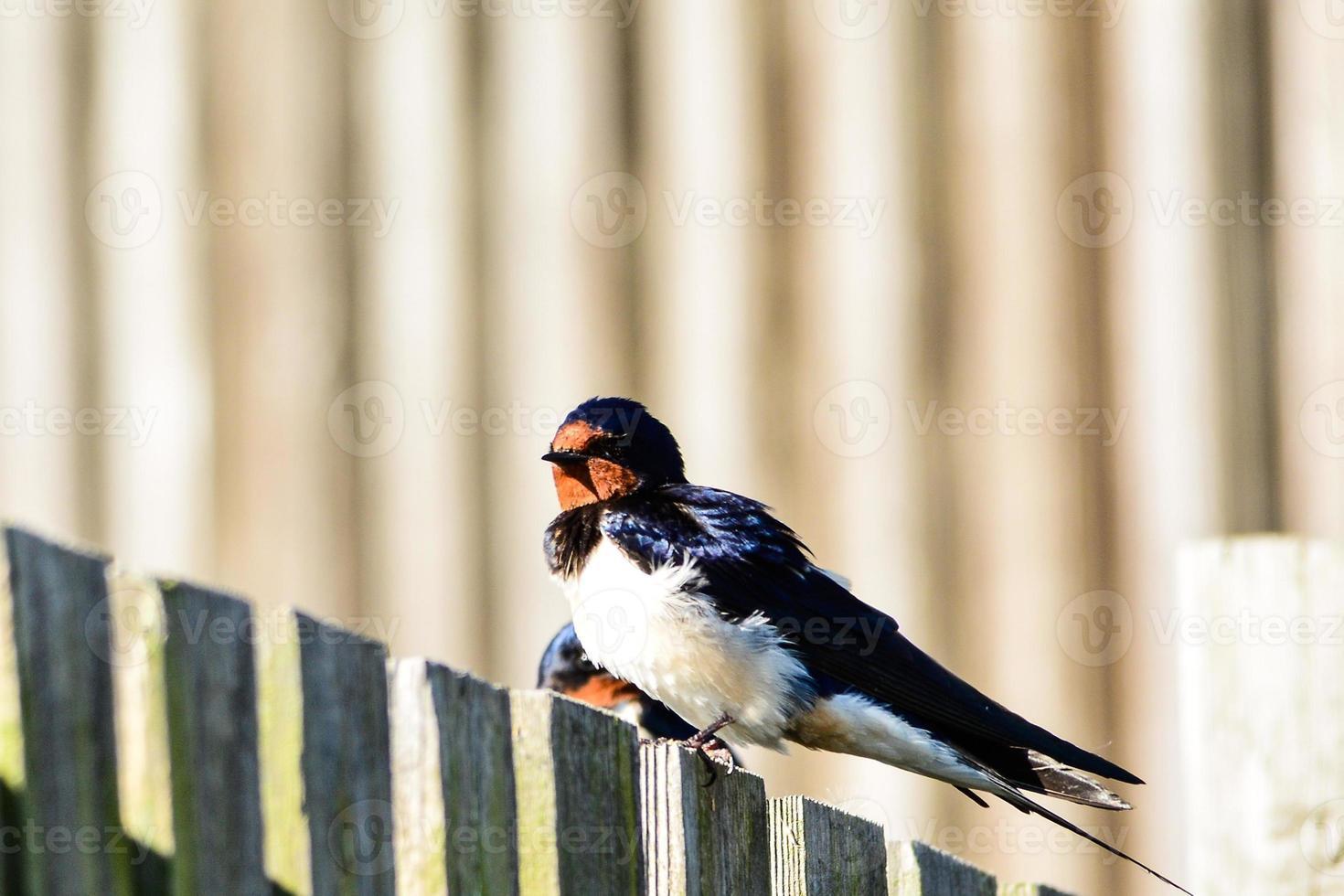 mischen Sie europäische Vögel foto