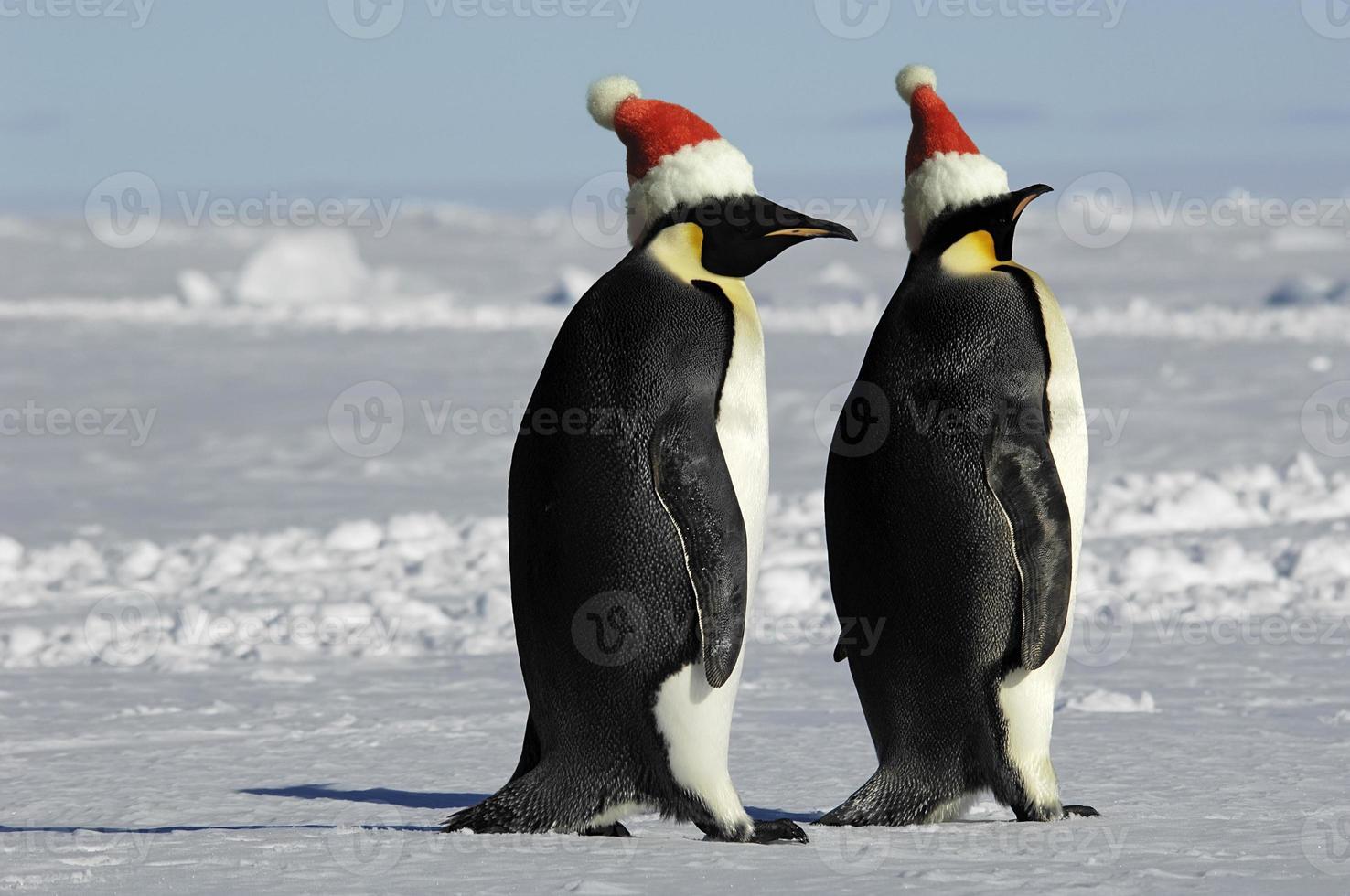 Pinguinpaar zu Weihnachten foto