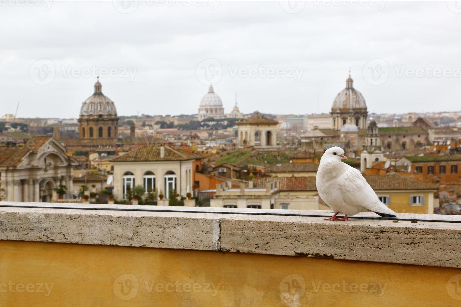 weiße Taube & Skyline von Rom foto