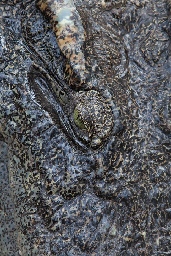 Nahaufnahme Auge eines Salzwasserkrokodils foto