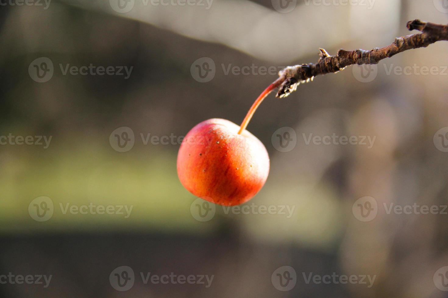 roter Apfel foto