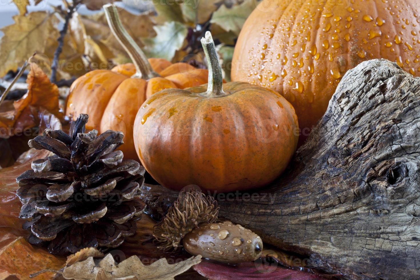 Herbstszene mit Kürbissen foto