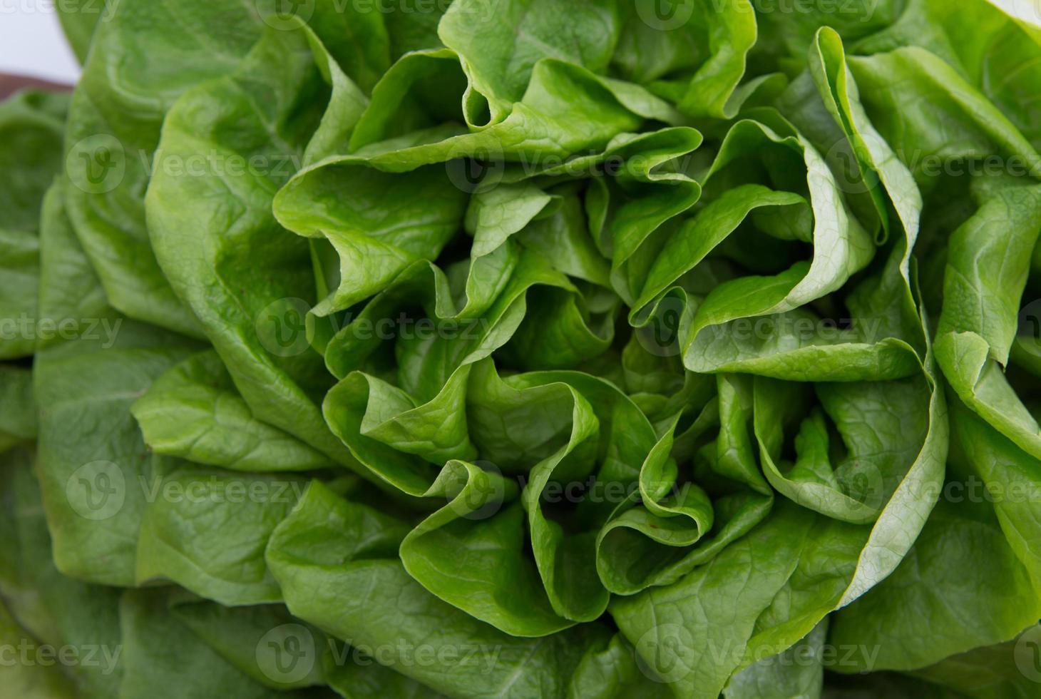 grüne Salatblätter foto