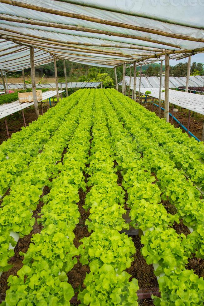 organisches Gemüse foto