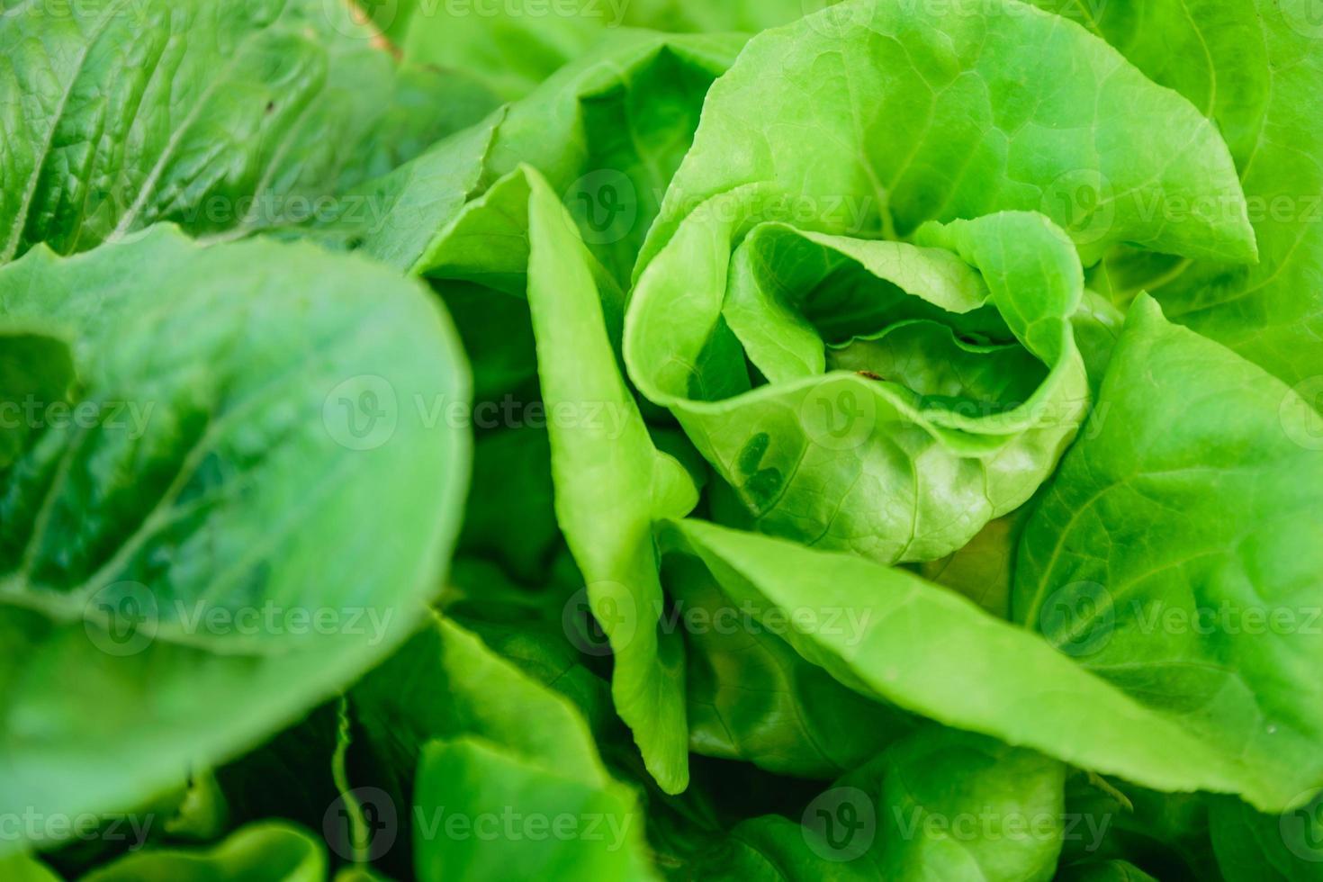 hydroponisches Gemüse foto