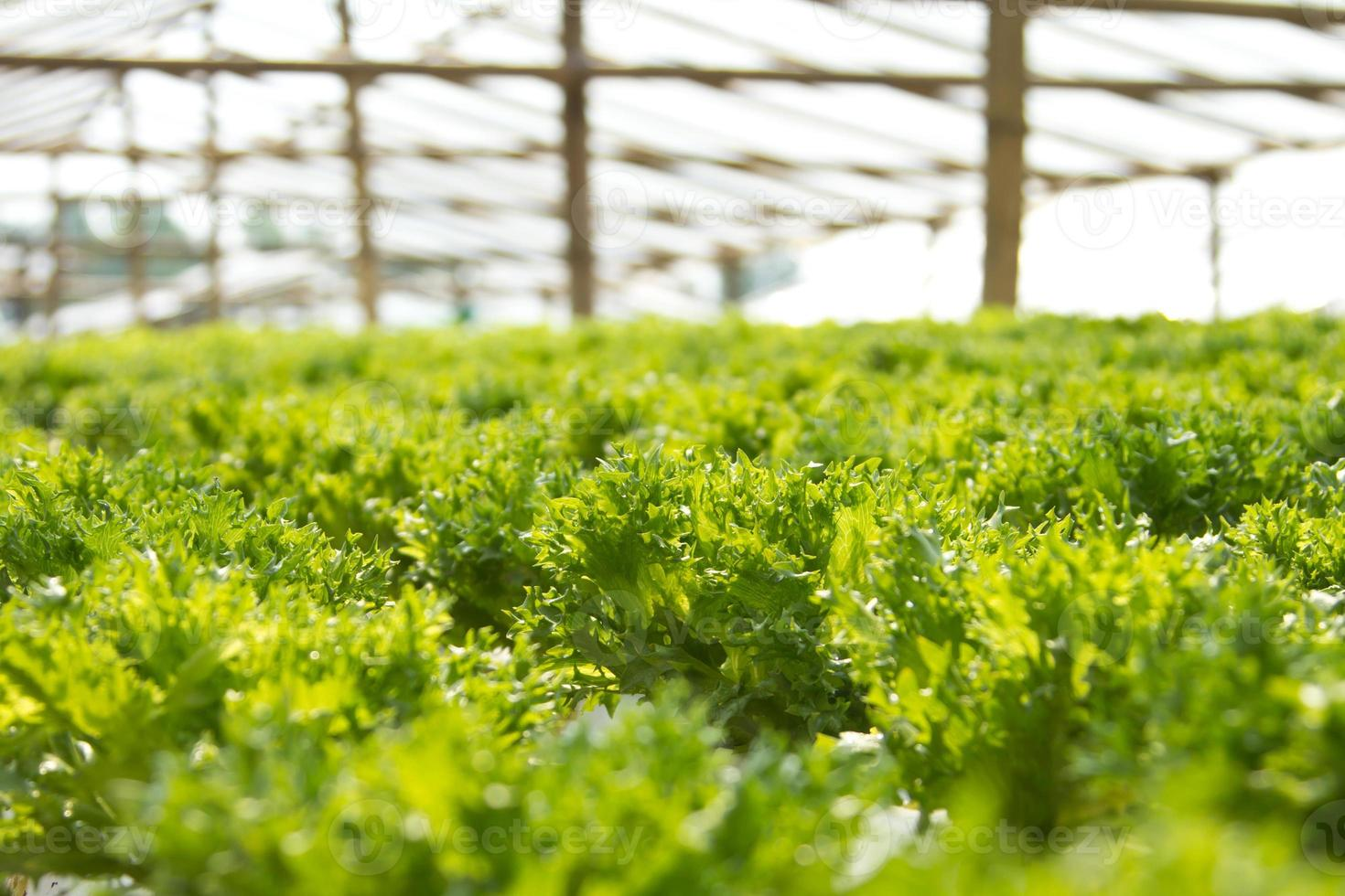 Hydrokultur Gemüse foto