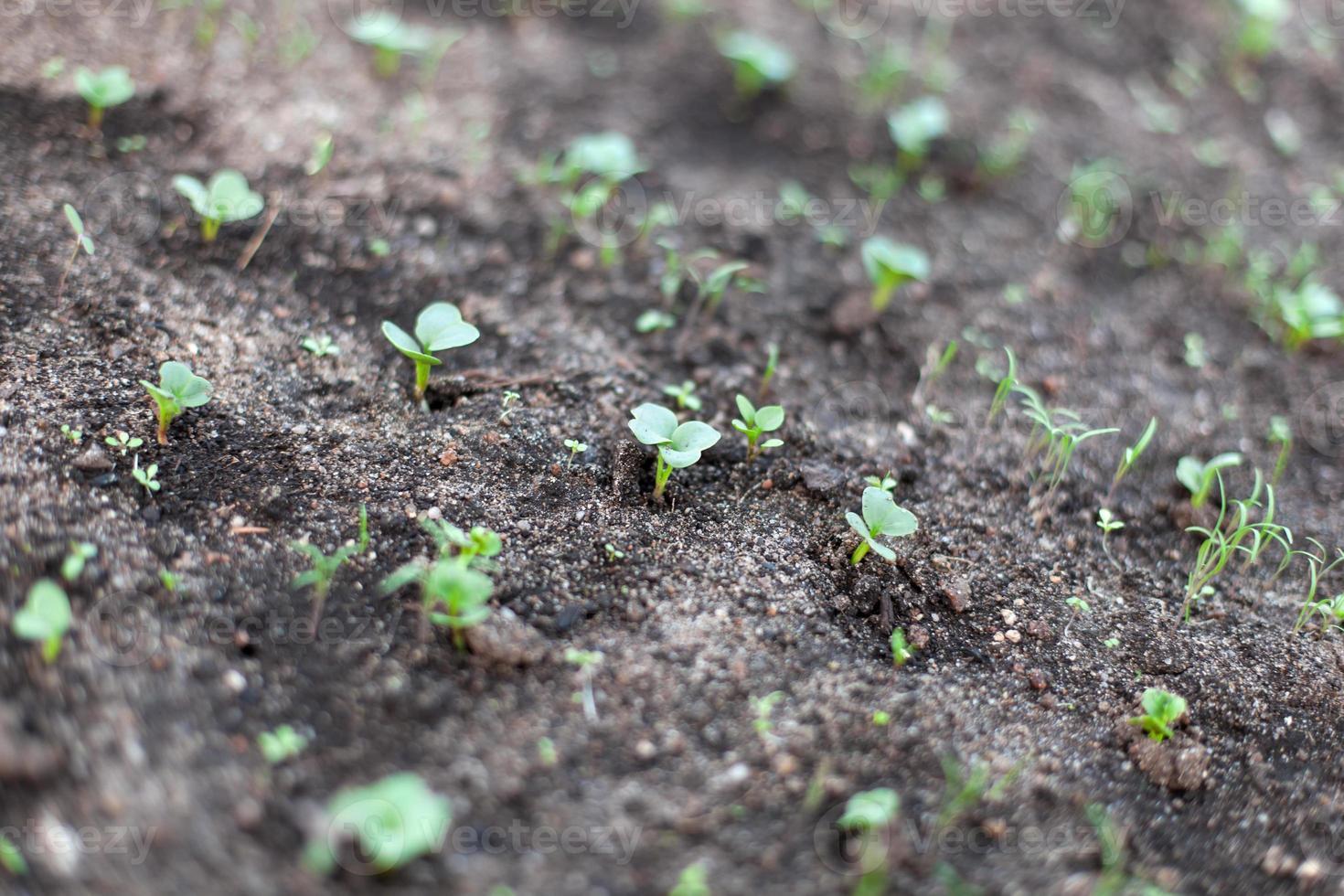 Gartenbetten foto