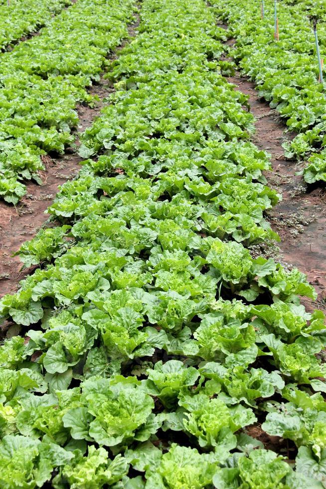 Gemüsegarten foto