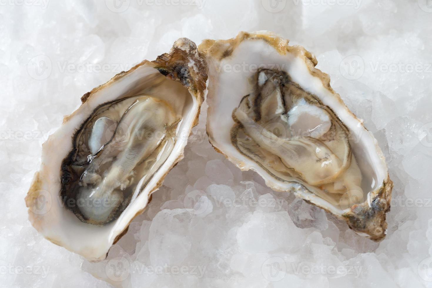 französische Vorspeisen Austern foto