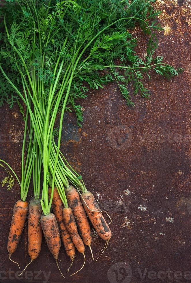 Bündel frische Gartenkarotten über rostigem Grunge-Metallhintergrund foto