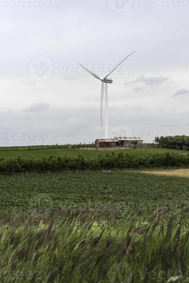 Windkraftanlagen auf dem Gebiet von Weizen und Mais foto