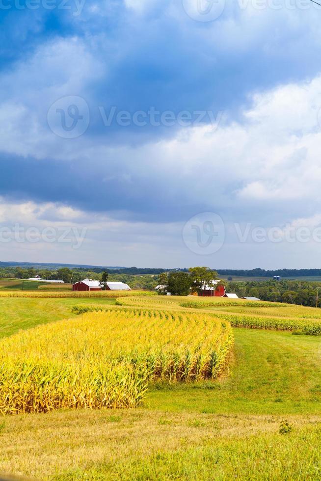 Maisfeld der amerikanischen Landschaft mit stürmischem Himmel foto